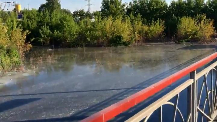 Росприроднадзор не нашел стоков «Кока-Колы» в зловонном «озере» у платформы «Вишневая»
