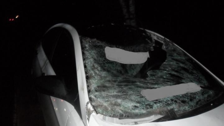 На трассе в Ярославской области иномарка сбила лося: животное погибло