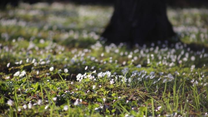 Синоптики дали прогноз на весну и лето в Башкирии