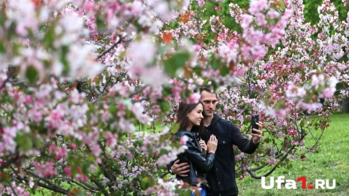 «Яблоня в белых кудрявых цветах»: в уфимском саду расцвели нежные бутоны