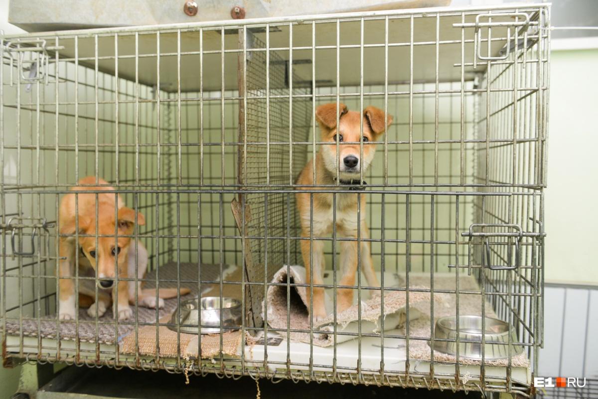 «Животные узнают по голосу»: истории екатеринбурженок, которые выхаживают бездомных кошек и собак