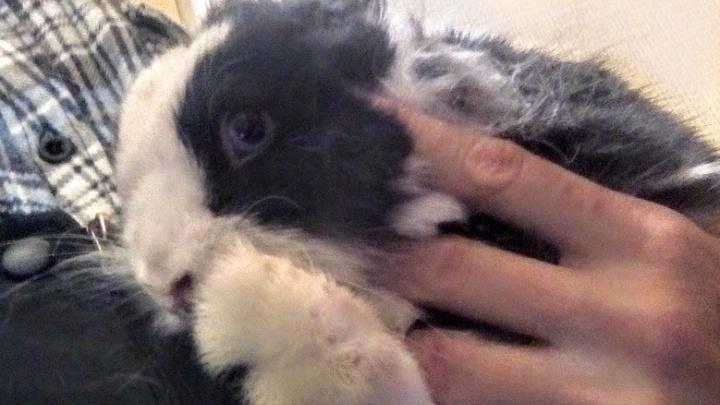 В Екатеринбурге спасли кролика, которого хозяева заперли в туалете