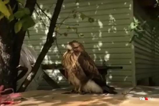 Птица выглядит нездоровой