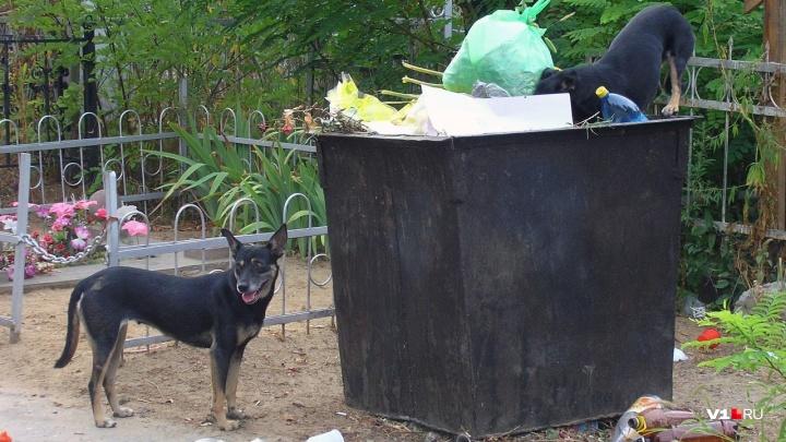 «Власть идет на поводу у буйных и сплоченных фанатиков»: публицист о людях и диких собаках