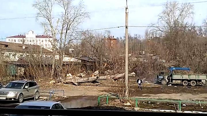 В Перми во время вырубки сквера упавшее дерево чуть не придавило рабочего. Видео