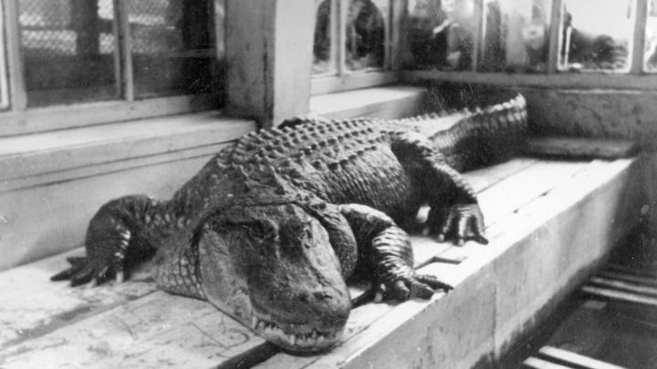 Екатеринбуржцев попросили прислать старые фото зоопарка и его обитателей. Они войдут в историю