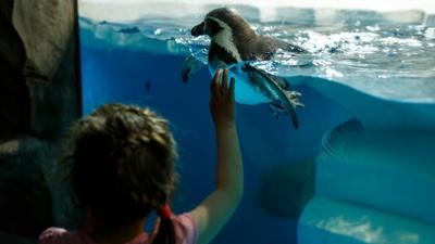 В самарском океанариуме сообщили стоимость билетов и дату открытия