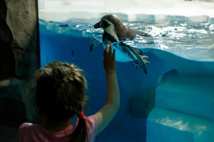 Одной из фишек станут краснокнижные пингвины