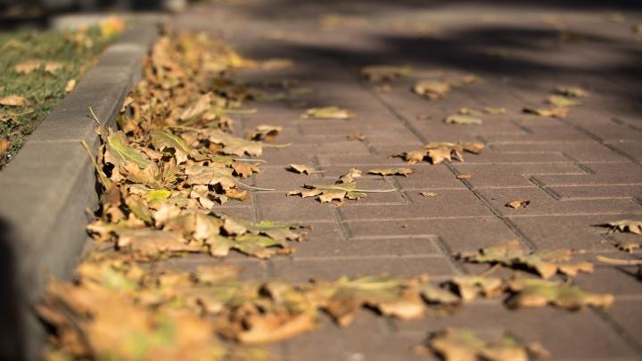 Последние теплые дни: в Ростовской области ожидается резкое похолодание