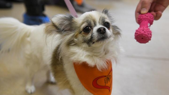 «Люди в депрессии вдруг начинают смеяться»: как собаки лечат пациентов психбольницы в Екатеринбурге