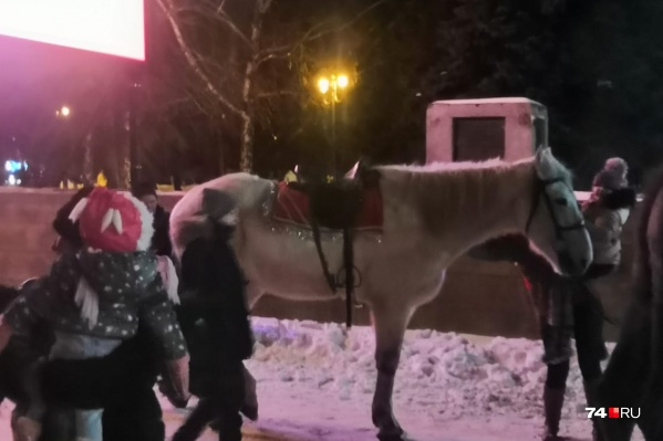 Лошади и другие животные продолжают катать маленьких челябинцев в центре города