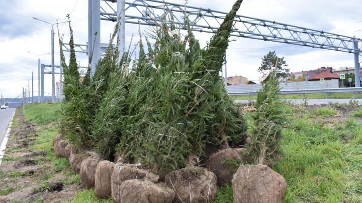 На Николаевском проспекте стали высаживать кустарники и деревья
