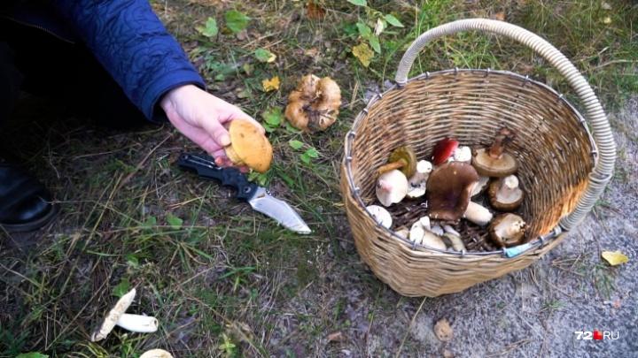 В окрестностях Тюмени пошли первые грибы. Смотрим, что удалось собрать нашим землякам