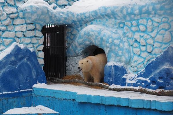 Медведица уже находится в вольере зоопарка