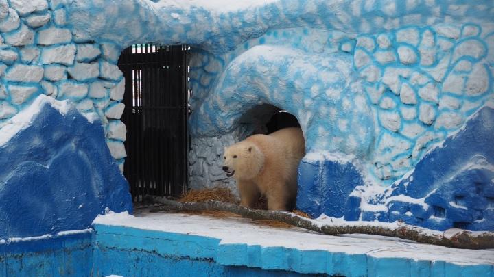 «Дикси или Умка»: какие имена предлагают красноярцы для новой крохи-медведицы в зоопарке