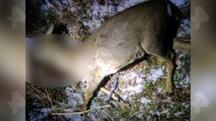 В Подмосковье задержали свердловского чиновникапо подозрению в браконьерском убийстве косули