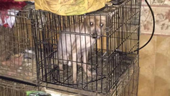 Одна уже погибла: ярославцы бросились помогать собакам из скандального питомника