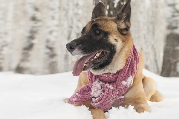 Чтобы собака стала другом человека, будущий владелец должен осознанно подойти к приобретению питомца