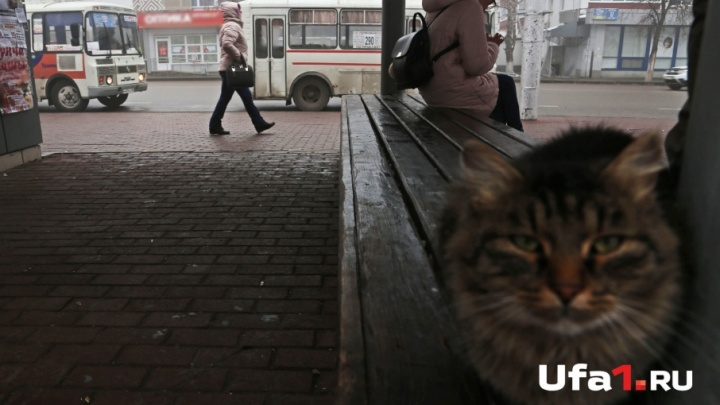 Штормовое предупреждение: в Башкирии ухудшится погода