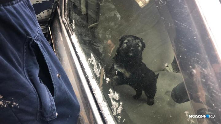 Щенка спасли из запертой машины на морозе: смотрим, как это было
