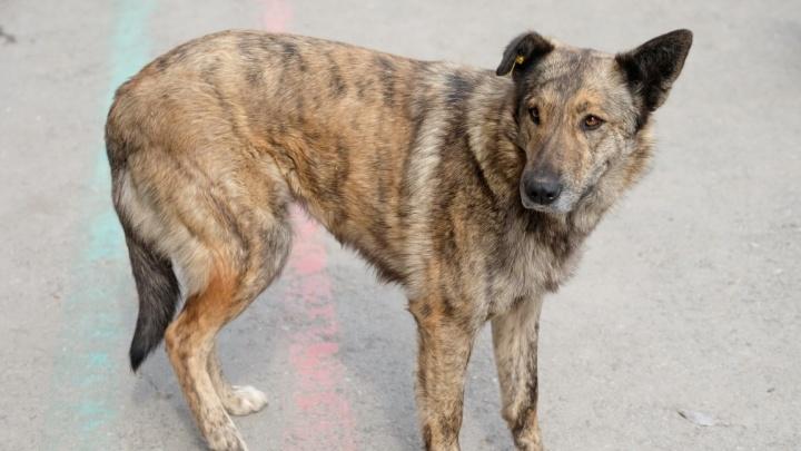 «Количество собак на улицах возрастёт кратно». В Перми обсудили новый закон о возвратном отлове