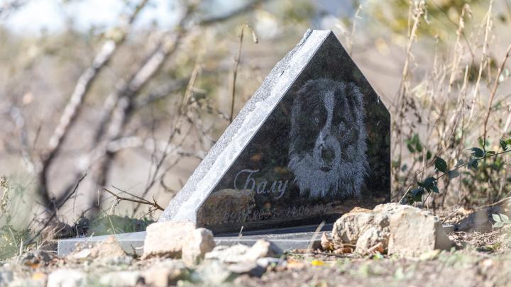 Псы всегда попадают в рай: на выезде из Волгограда растет кладбище домашних животных