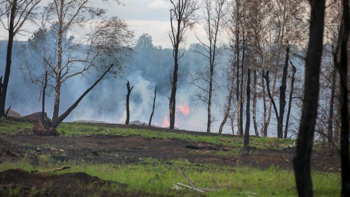 «Если есть дым — тушите»: Медведева попросили изменить правила ликвидации пожаров в крае
