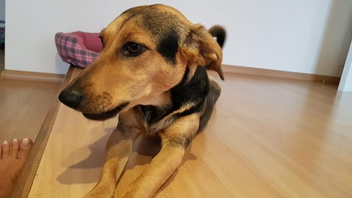 Испугались фейерверков и убежали: красноярцы разыскивают своих собак
