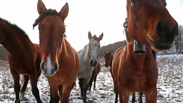Где в Уфе взять лошадь напрокат и научиться кататься