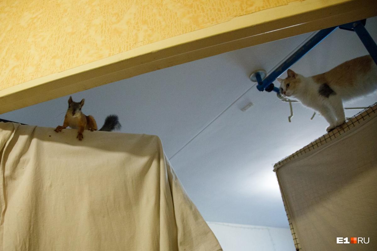 Кошки неравнодушны к своим новым соседям