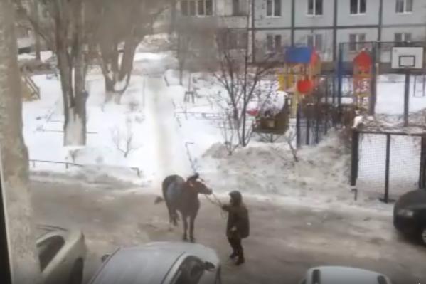 Лошадь ни в какую не хотела трогаться с места