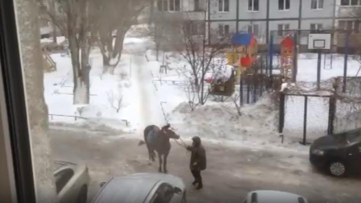 «Лошадь отказывается идти по льду»: самарцы сняли забавное видео во дворе на Московском шоссе