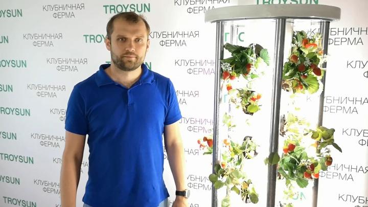 «Захотелось клубнички»: южноуралец придумал, как выращивать в квартире ягоды круглый год
