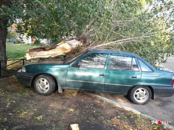 Ветер обрывал провода и валил деревья