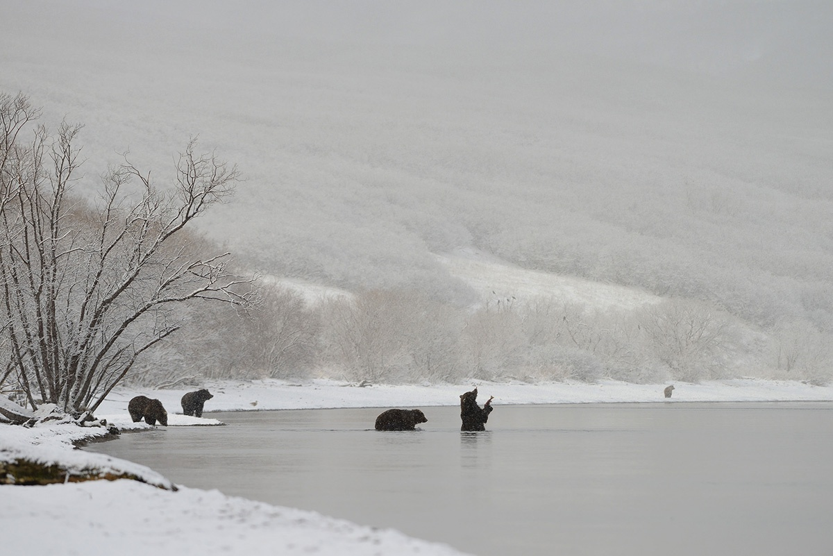 В Екатеринбурге покажут трогательные фото отношений медведицы с детёнышами