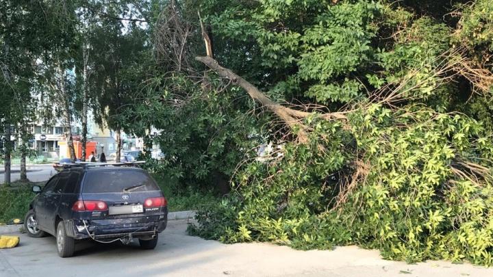 В Ленинском районе дерево упало на припаркованный автомобиль