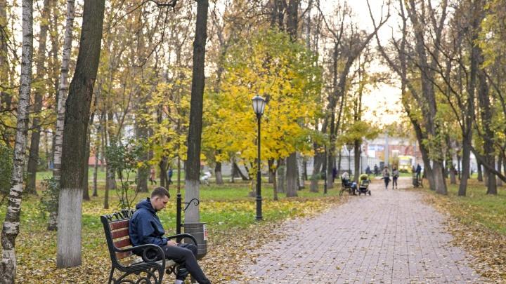 Не кошмарьте людей: в Госдуме объяснили, как новый закон коснётся ярославских фрилансеров и нянечек