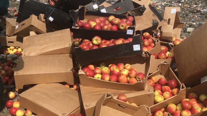 В Кургане уничтожили более 2,5 тонны яблок