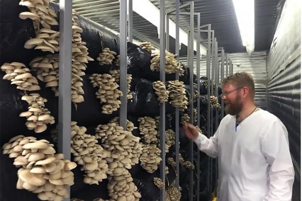 Вложения в грибную ферму бизнесмены оценивают в 1 миллион долларов