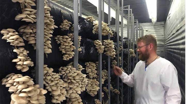 Смешные грибочки:бывший кавээнщик открыл ферму, где выращивают грибы на соломе