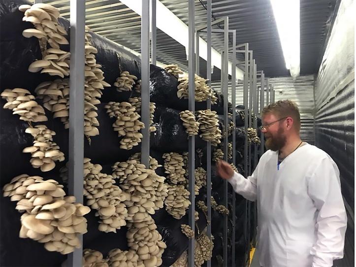 чудом удается фото ферм культивации вешенки париж