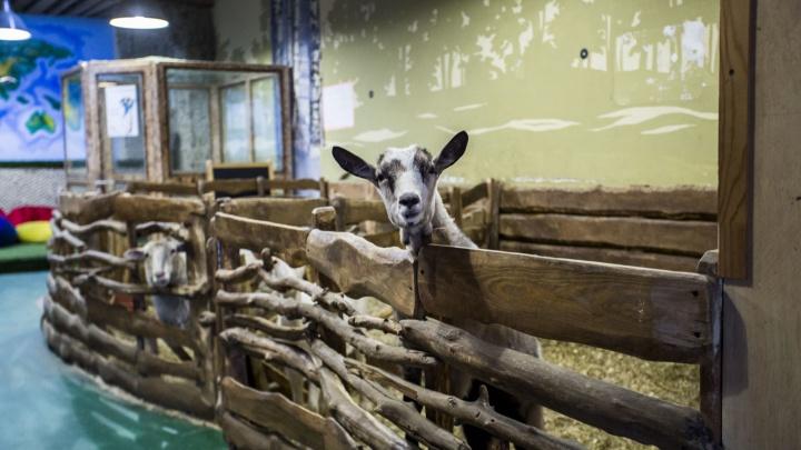 Белки по 300: контактный зоопарк не выдержал нового закона и устроил распродажу животных