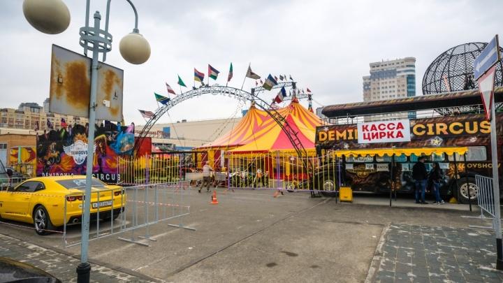 Ространснадзор наложил штраф за прожекторы у «Цирка Шапито Демидовых» в Новосибирске