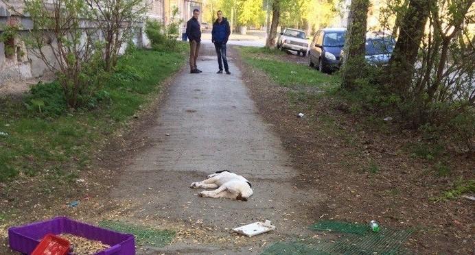 Екатеринбуржец, который выкинул котят и щенка с балкона, был судим за убийство человека