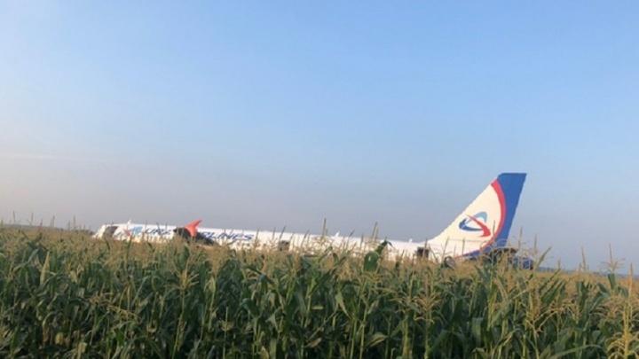 СК возбудил уголовное дело об экстренной посадке самолета «Уральских авиалиний» на кукурузном поле