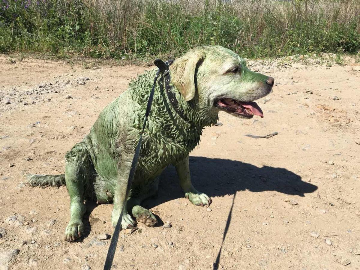 После купания в Шершнях даже собака становится похожей на крокодила