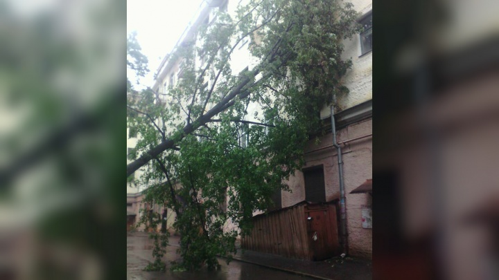 ЧП во время дождя: в центре Ярославля дерево рухнуло на жилой дом