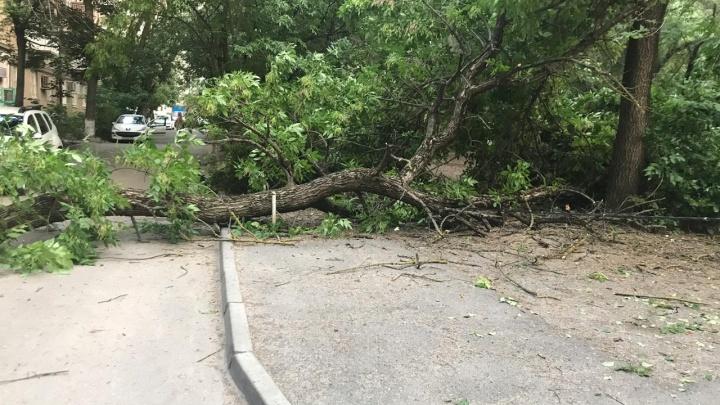 Последствия стихии: ветер повалил в Ростове 26 деревьев