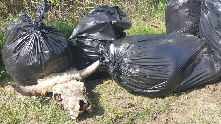 Пять тонн за 1,5 часа: на берегу Качи«высадился» экологический десант