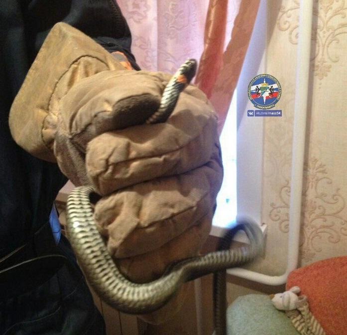 Спасатели поймали змею за диваном